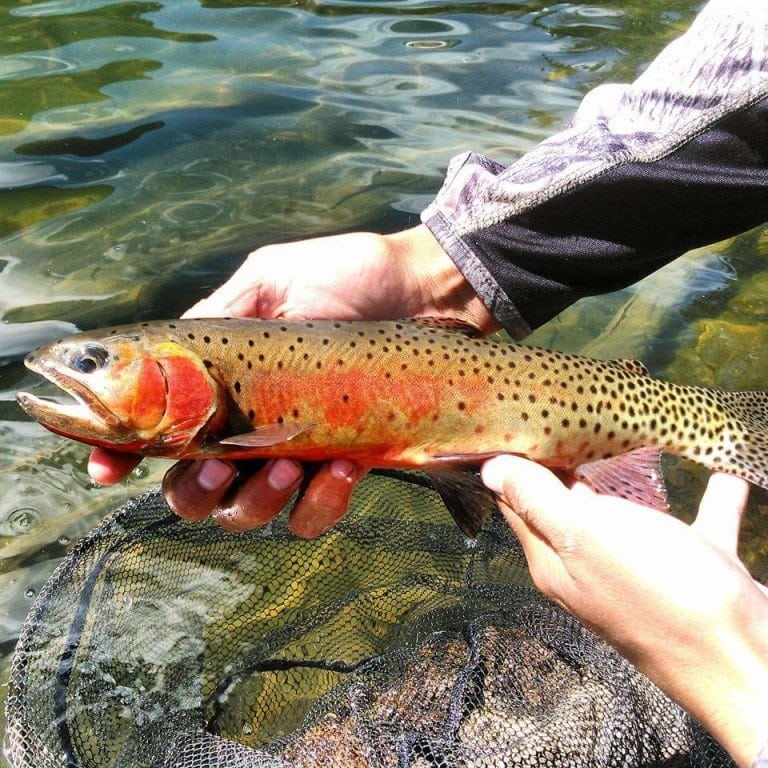 Front Range Anglers | Fly Fishing Waters Archive - Front Range